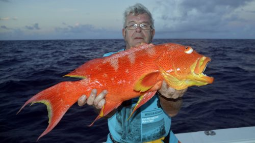 Moontail sea bass on baiting by Momo - www.rodfishingclub.com - Rodrigues - Mauritius - Indian Ocean