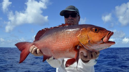 Red snapper on baiting released by Jonas - www.rodfishingclub.com - Rodrigues - Mauritius - Indian Ocean