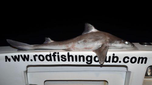 Sharky from the high deep - www.rodfishingclub.com - Rodrigues - Mauritius - Indian Ocean